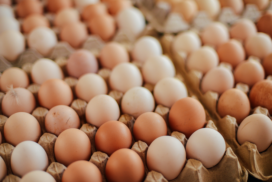 What you need to know about the egg scare