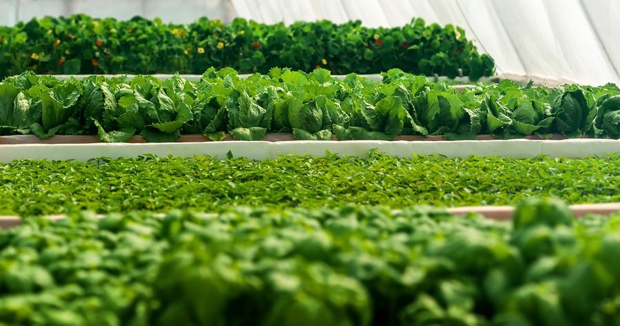 Surge in Popularity of Micro Farming